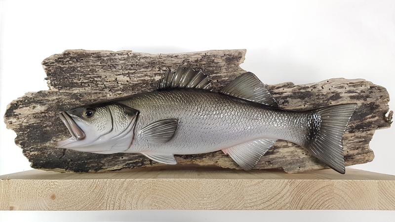 Trofei per la pesca