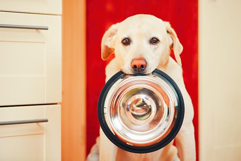 Eagle: il cibo per cani e gatti a misura di … pet. Naturale e cruelty free