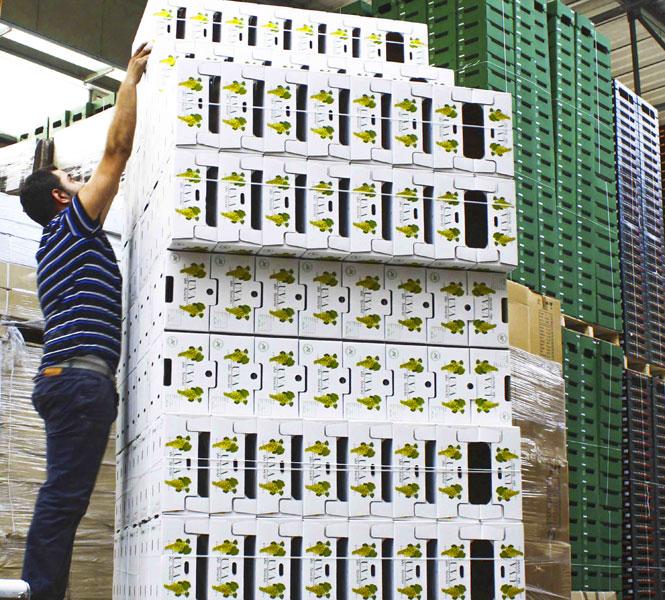 Imballaggi ecosostenibili in legno per ortofrutta europak for Arredamento ortofrutta in legno