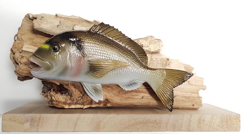 Trofei per gare di pesca