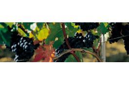 Pali per vigneti e viticoltura