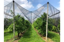 Orchard, vineyards and nursery protection