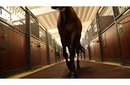 Pavimenti per maneggi e scuderie cavalli Ecohorse
