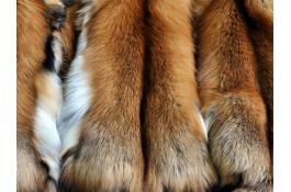Pelle di volpe gold naturale