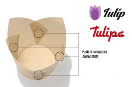 Pirottini incollati Tulip e Tulipa