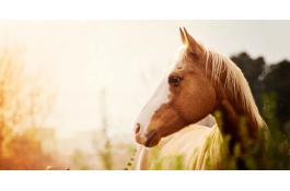 Distributore automatico di cibo per cavalli