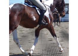 Easy Ride - Griglia di consolidamento sottofondi equestri