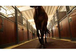 Floors for horse stables and riding schools Ecohorse