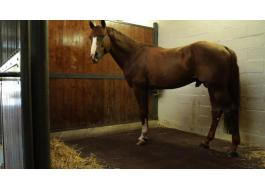 Pavimenti per maneggi scuderie cavalli Ecohorse