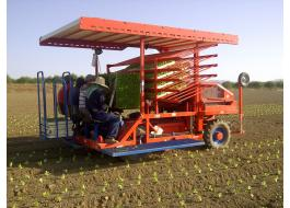 Transplanter for vegetables