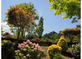 Piante per ornare giardini e parchi