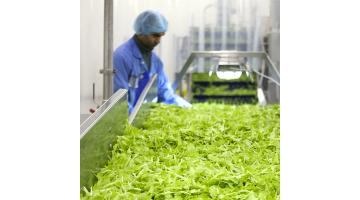 Lavorazione vegetali freschi