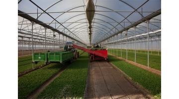 Lavorazione verdura fresca