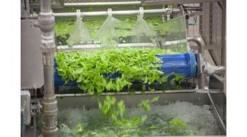 Trasformazione vegetali freschi