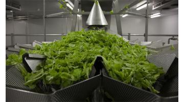 Trasformazione verdura fresca