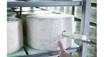 Produzione gorgonzola
