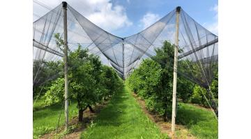 Anti-hail systems for orchard protection