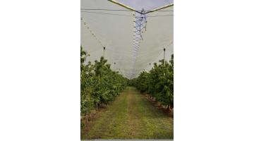 Rainproof systems for orchard protection