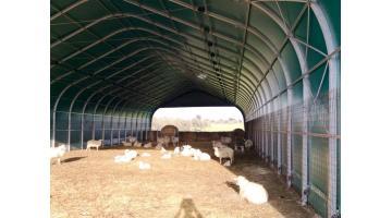 Produzione box per vitelli e bestiame