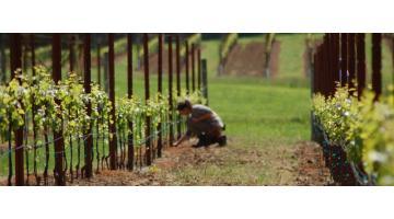 Холодное профилирование листового металла: производство опор для виноградников