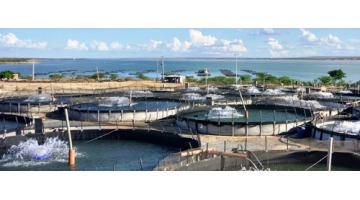 Lavorazione prodotti ittici oceano atlantico