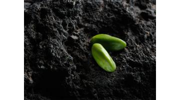 Lavorazione pistacchio
