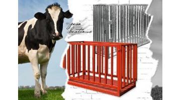 Pesa bestiame