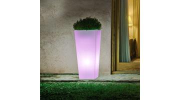 Bright outdoor plants