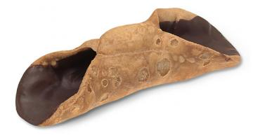 Cannoli ricoperti di cioccolato per pasticceria