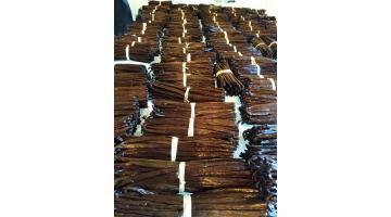 Vendita bacche di vaniglia del Madagascar