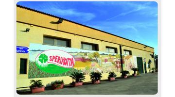 Produzione latticini siciliani