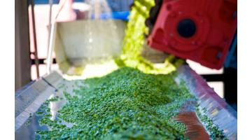 Verdure surgelate confezionate per retail e food service