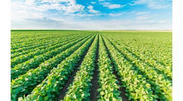 Verdure surgelate in foglia per retail