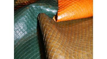 Serpente buccata Aloe