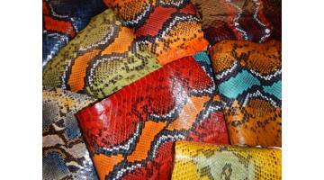 Serpente buccata stampa caracas