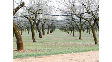 Produzione frutta secca