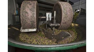 Produzione olio extravergine di oliva da filiera controllata