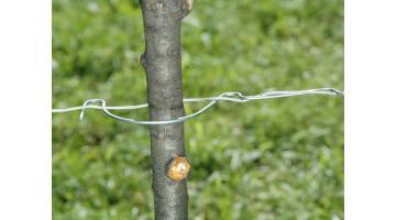Materiali per vigneti e viticoltura: gancio prezincato