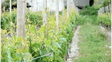Materiali per vigneti e viticoltura: molla distanziatrice