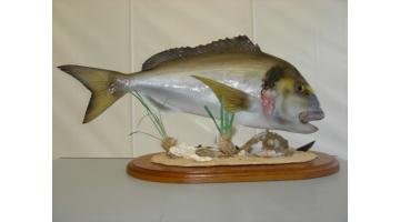 Trofei in resina per la pesca