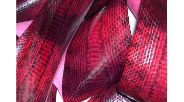 Pelle di serpente Elaphe radiata