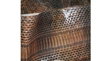 Pelle di serpente radiata