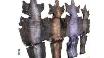 Pelli di caimano rifinizione Ontario