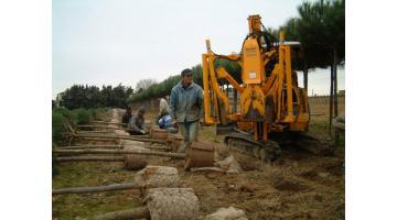 Zollatrice B350 su escavatore per pinus pinea