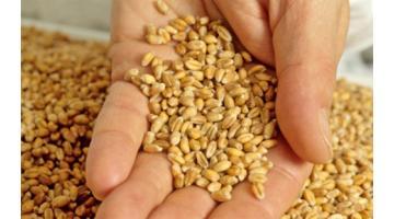 Farina a ridotto impatto glicemico