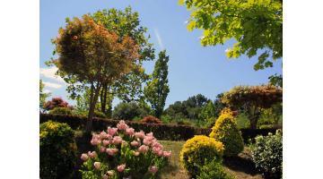 vivaio di piante decorative da giardino piante mediterranee