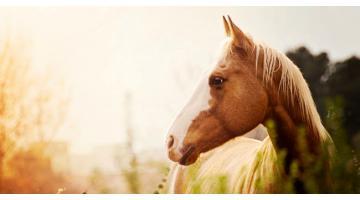 Distributore automatico di cibo per allevamento cavalli