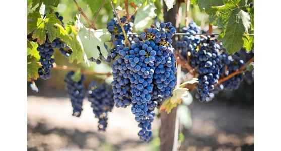 Produzione macchine per trasporto e travaso uve – Strazzari srl